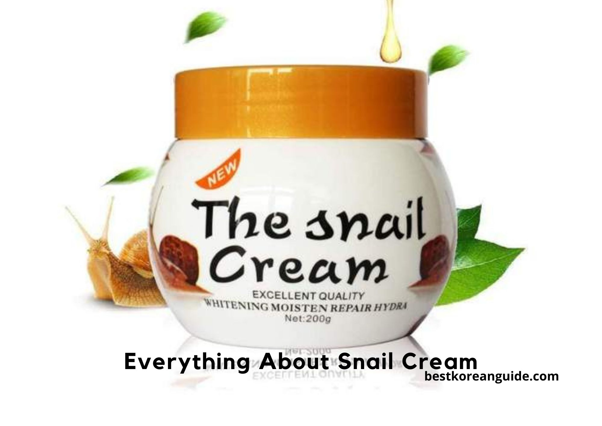 Everything About Snail Cream